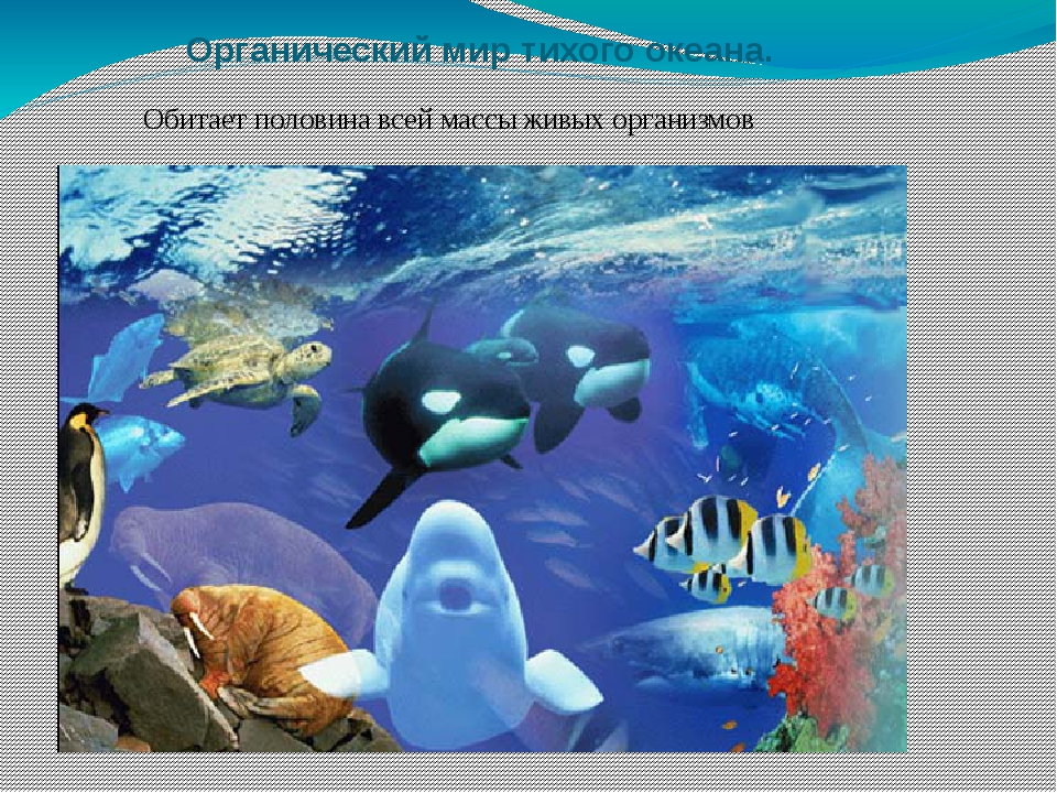 Органический мир тихого океана. Обитает половина всей массы живых организмов