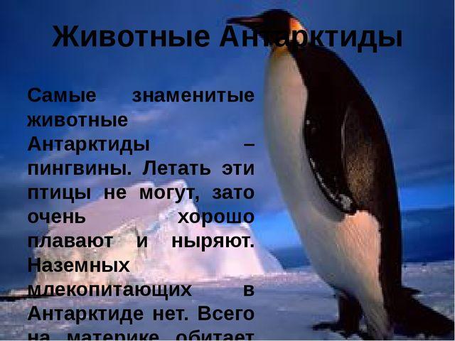 Животные Антарктиды Самые знаменитые животные Антарктиды – пингвины. Летать э...