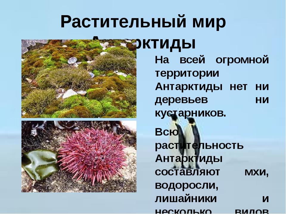Растительный мир Антарктиды На всей огромной территории Антарктиды нет ни дер...