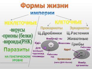 хх хх (нити ДНК+белок) Ядро Мембр.орг-лы Мезосомы ДНК (кольцо): нуклеоид плаз