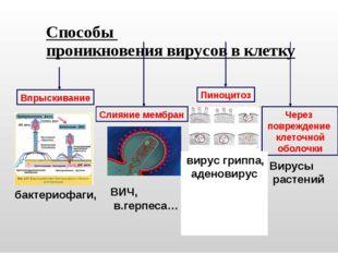 Способы проникновения вирусов в клетку Впрыскивание Слияние мембран Пиноцитоз
