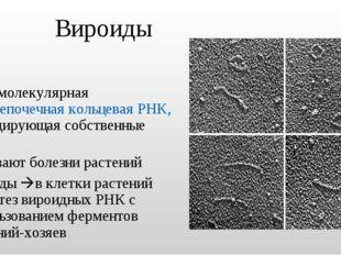 Вироиды низкомолекулярная одноцепочечная кольцевая РНК, не кодирующая собстве