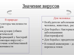 Значение вирусов В природе: Регуляторы численности видов Трансдукция (обмен г
