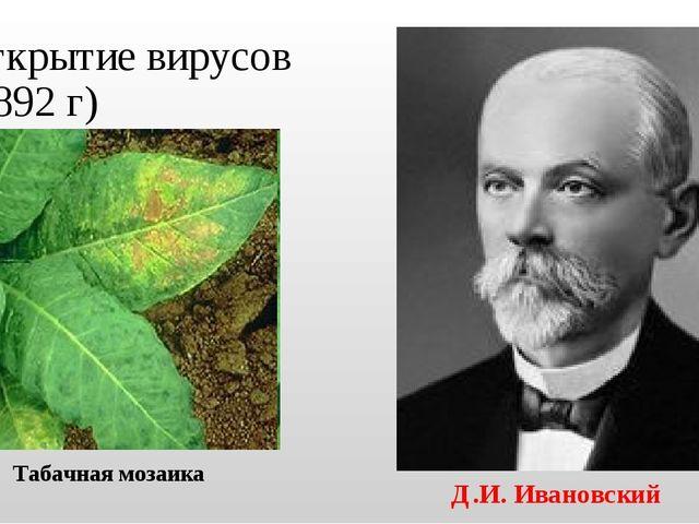 Открытие вирусов (1892 г) Д.И. Ивановский Табачная мозаика
