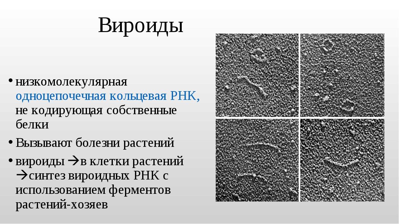 Вироиды низкомолекулярная одноцепочечная кольцевая РНК, не кодирующая собстве...
