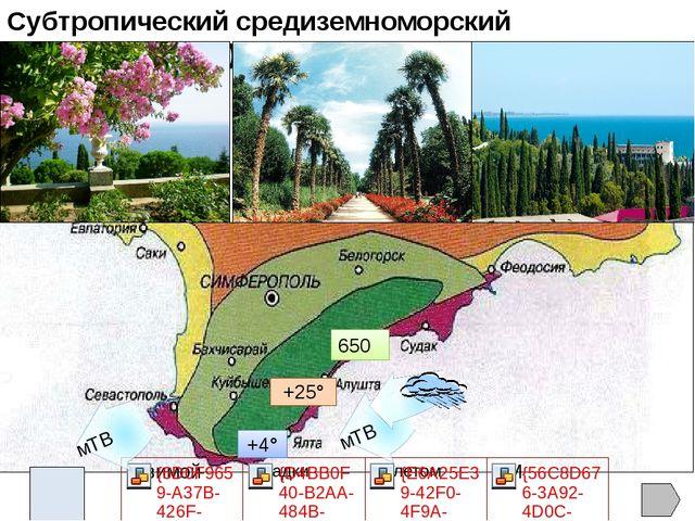 В лесах Горного Крыма можно увидеть оленей, муфлонов, косуль, диких кабанов....