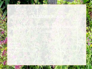 """Мектеп ҒЫЛЫМИ ЖОБА Тақырыбы: """"Киікотының пайдалы қасиеті"""" Сыныбы: Ізденуші:"""