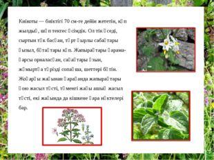 Киікоты — биіктігі 70 см-ге дейін жететін, көп жылдық, шөп тектес өсімдік. Ол