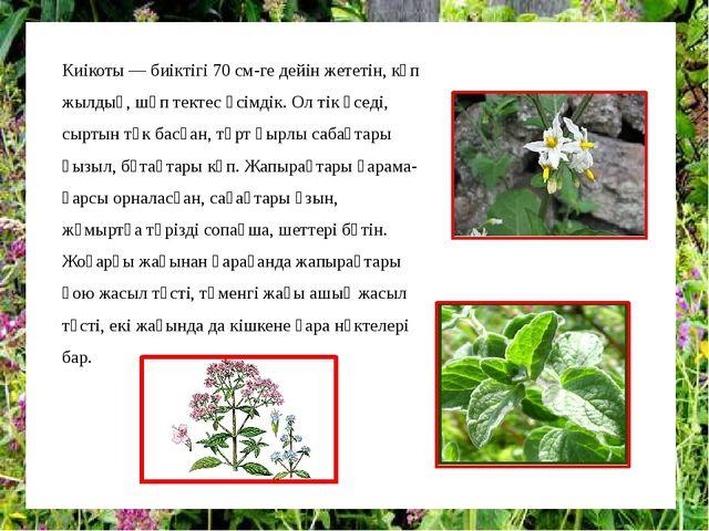 Киікоты — биіктігі 70 см-ге дейін жететін, көп жылдық, шөп тектес өсімдік. Ол...