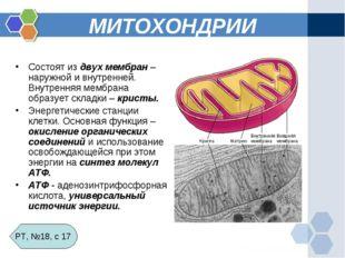 МИТОХОНДРИИ Состоят из двух мембран – наружной и внутренней. Внутренняя мембр