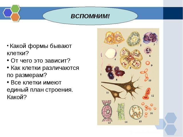 ВСПОМНИМ! Какой формы бывают клетки? От чего это зависит? Как клетки различаю...