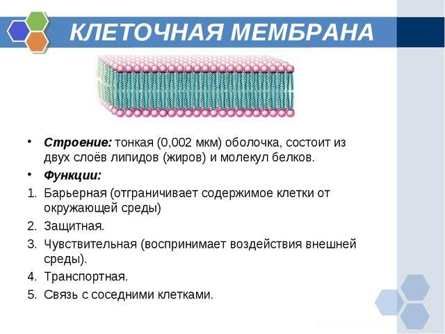 КЛЕТОЧНАЯ МЕМБРАНА Строение: тонкая (0,002 мкм) оболочка, состоит из двух сло...