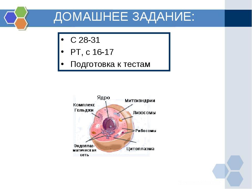 ДОМАШНЕЕ ЗАДАНИЕ: С 28-31 РТ, с 16-17 Подготовка к тестам