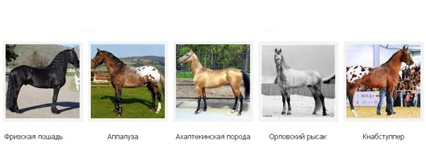 это про породы лошадей фото с названиями по алфавиту улучшения