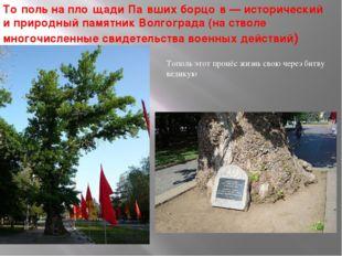 То́поль на пло́щади Па́вших борцо́в— исторический и природный памятник Волго
