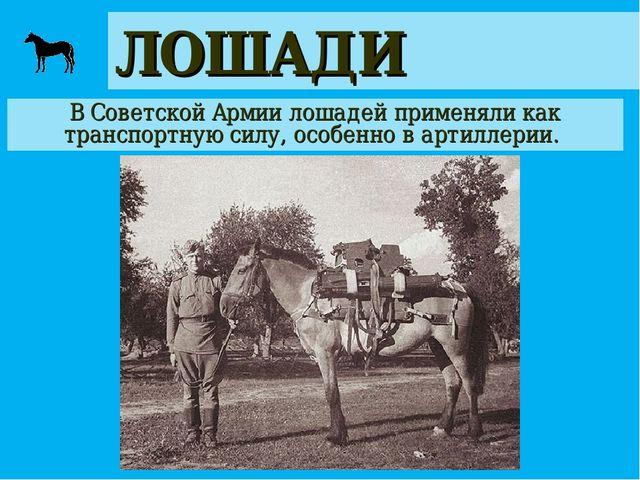 ЛОШАДИ В Советской Армии лошадей применяли как транспортную силу, особенно в...