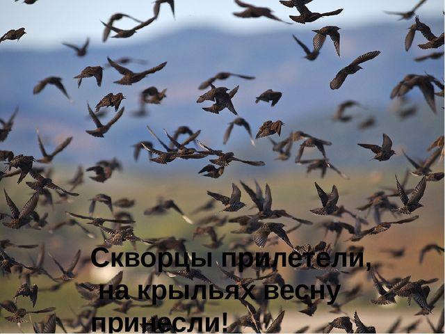 Скворцы прилетели, на крыльях весну принесли!