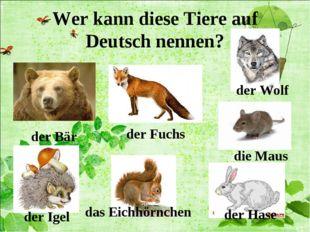 Wer kann diese Tiere auf Deutsch nennen? der Bär der Fuchs der Wolf der Igel