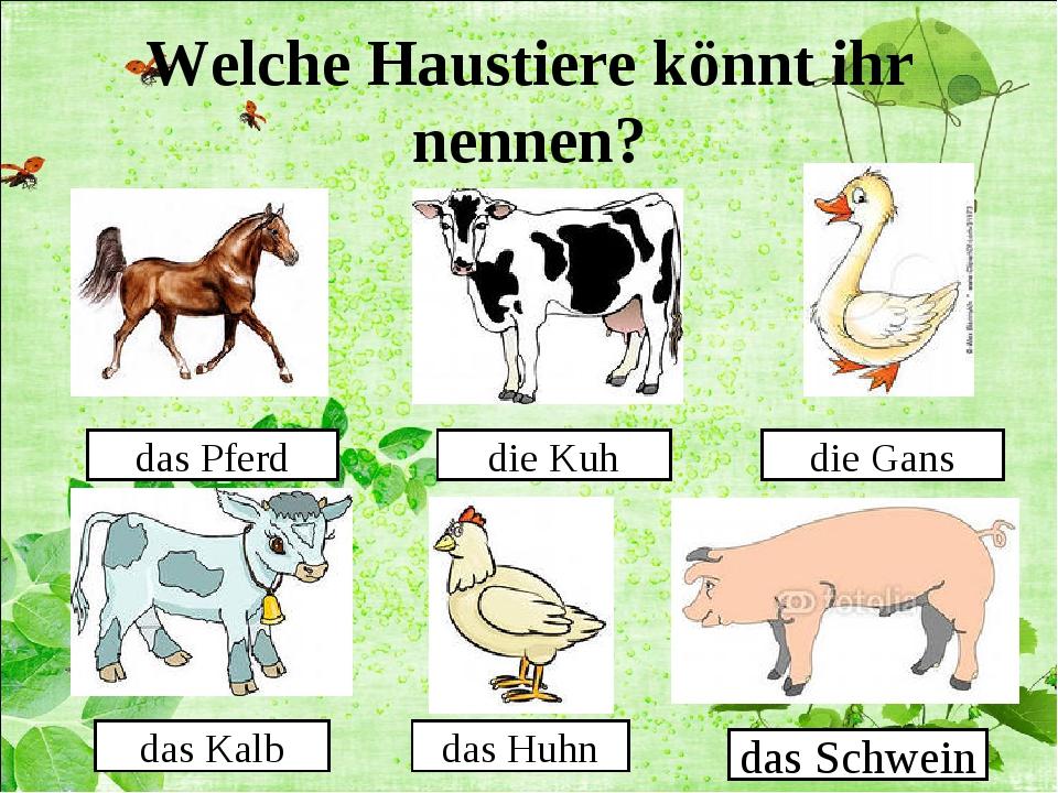 Welche Haustiere könnt ihr nennen? das Pferd die Kuh die Gans das Kalb das Hu...