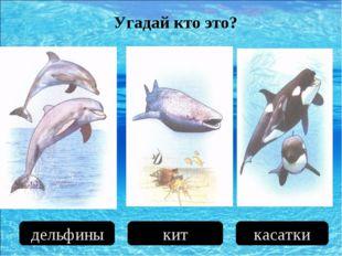 дельфины кит касатки Угадай кто это?