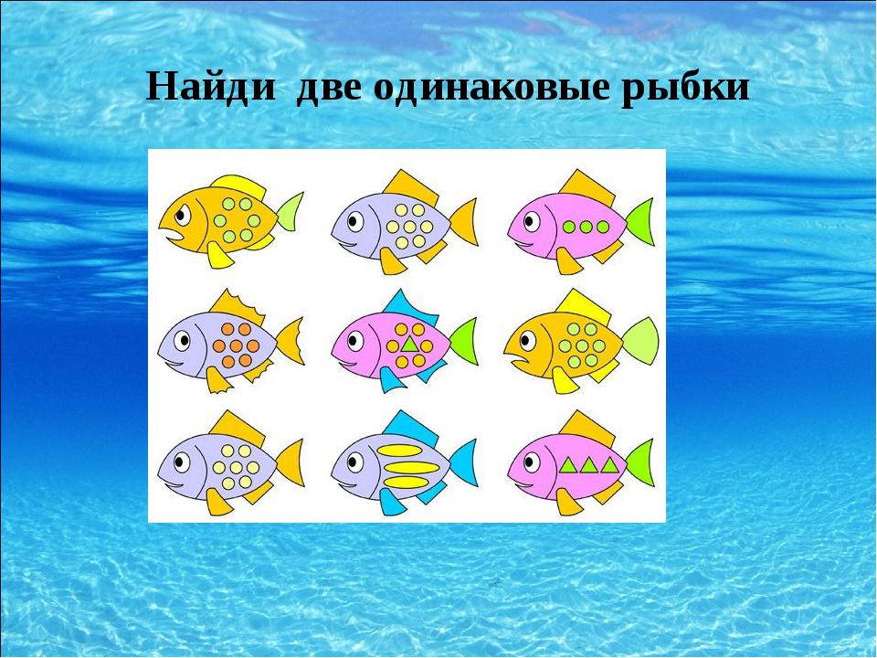Найди две одинаковые рыбки