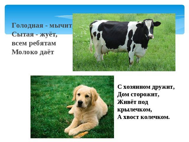 Голодная - мычит, Сытая - жуёт, всем ребятам Молоко даёт С хозяином дружит, Д...