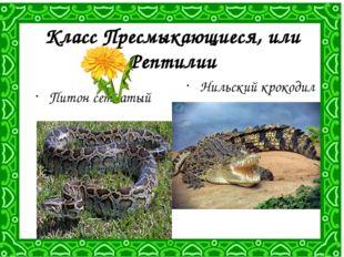 Класс Пресмыкающиеся, или Рептилии Питон сетчатый Нильский крокодил