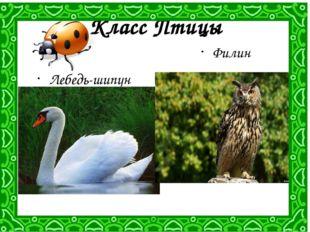 Класс Птицы Лебедь-шипун Филин