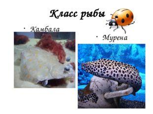 Класс рыбы Камбала Мурена