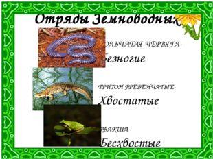 Отряды Земноводных КОЛЬЧАТАЯ ЧЕРВЯГА- Безногие ТРИТОН ГРЕБЕНЧАТЫЕ- Хвостатые