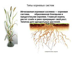 Мочковатая корневая система — корневая система, образованная боковыми и прида