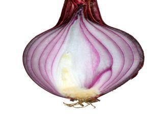 Лист — боковой (латеральный) орган, характеризующийся ограниченным ростом.