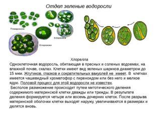 Хлорелла Одноклеточная водоросль, обитающая в пресных и соленых водоемах, на