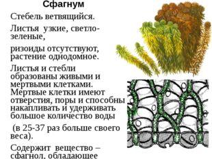 Сфагнум Стебель ветвящийся. Листья узкие, светло-зеленые, ризоиды отсутствуют