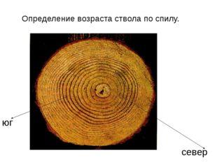 Определение возраста ствола по спилу. юг север