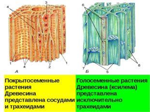 Проводящие ткани. А – ксилема; Б - флоэма 1 – сосуды ксилемы; 2 – трахеиды; 3