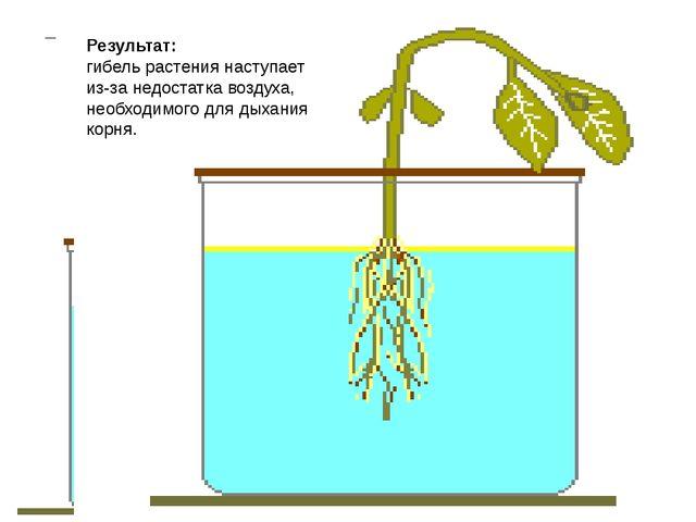 Дыхание корней Для нормального роста и развития растения необходимо чтобы к к...