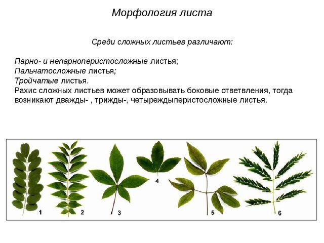 Среди сложных листьев различают: Парно- и непарноперистосложные листья; Пальч...