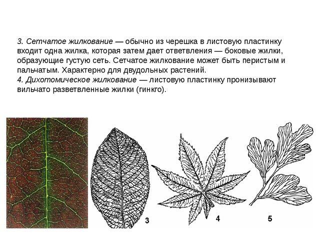 3. Сетчатое жилкование — обычно из черешка в листовую пластинку входит одна ж...