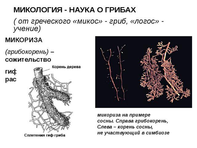 МИКОЛОГИЯ - НАУКА О ГРИБАХ ( от греческого «микос» - гриб, «логос» - учение)...