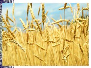 Вырос в поле дом — Полон дом зерном. Стены позолочены, Ставни заколочены. И с