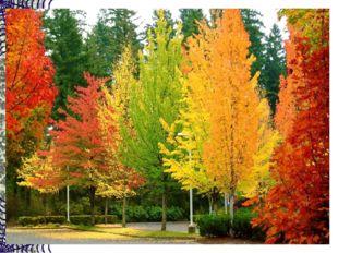 Оранжевые, красные на солнышке блестят. Их листья, словно бабочки кружатся и
