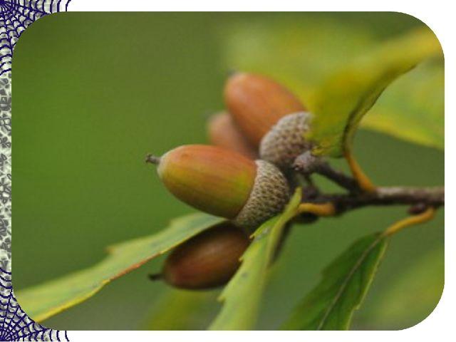 В золотой клубочек спрятался дубочек. Кто же это всё же?