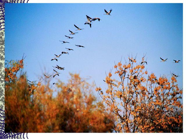 Сотни птиц, собравшись в стаи, Днем осенним улетают. А летят они туда, Где те...