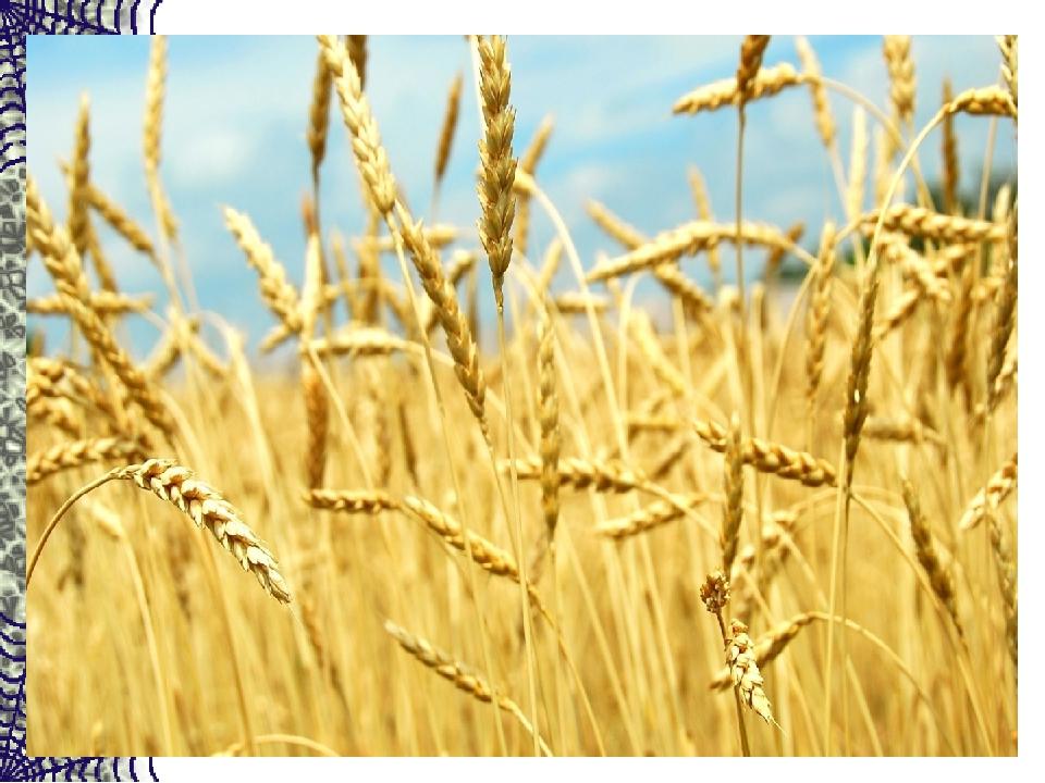 Вырос в поле дом — Полон дом зерном. Стены позолочены, Ставни заколочены. И с...