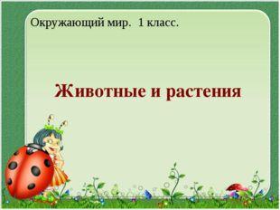 Животные и растения Окружающий мир. 1 класс.