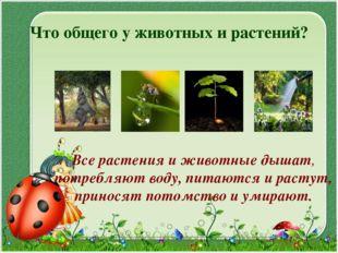 Что общего у животных и растений? Все растения и животные дышат, потребляют в