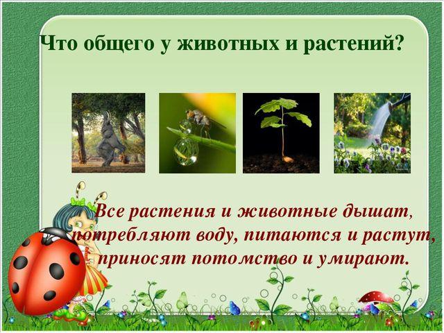 Что общего у животных и растений? Все растения и животные дышат, потребляют в...