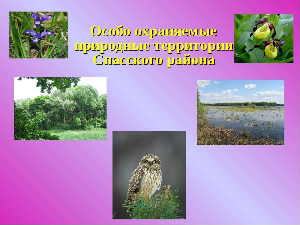 Особо охраняемые природные территории Спасского района