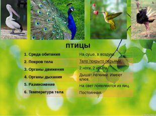 птицы 1.Среда обитания 2. Покров тела 3. Органы движения 4. Органы дыхания 5.